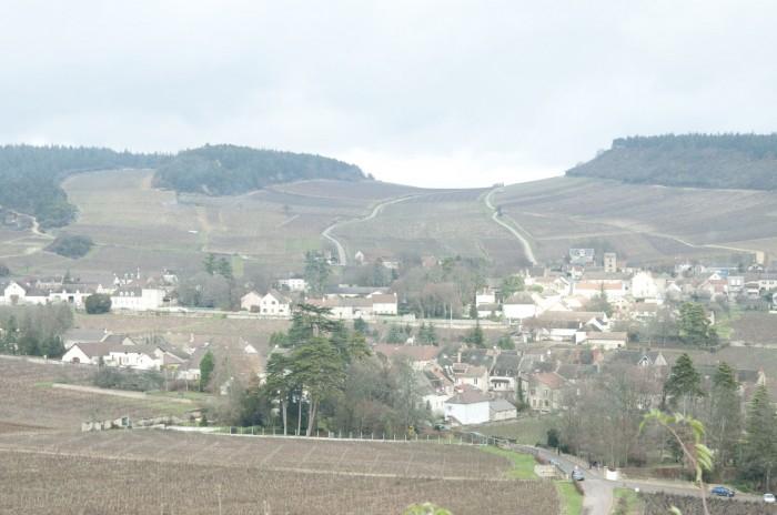 メルキュレの丘は林の間を風が通る。その下に畑が広がっている