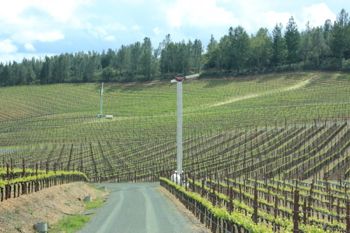 カリフォルニアスタイル エレガントなワインを生むソノマのワイナリー