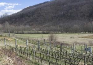 ワイン・ランキング フリウリ・ヴェネツィア=ジューリア州その多様性を知る白10本
