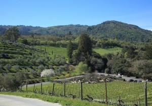 カリフォルニアのピノ・ノワール-4- こだわりのワイナリーが生む、個性的なピノ・ノワールワイン