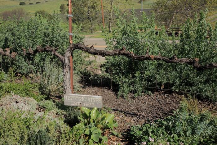 ワイナリーの設立は1973年。その創業時のぶどう樹はいまだ元気