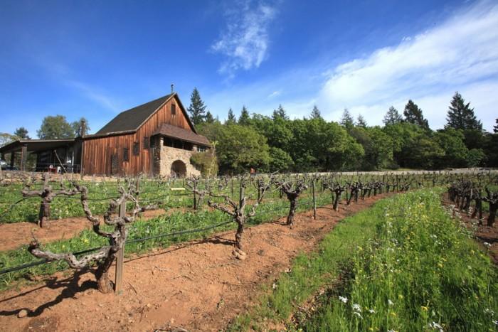 ピノ・ノワールの畑と旧ワイナリー