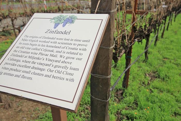 ワイナリーの前に植えられているジンファンデル。銘板にクロアチア・オリジン云々が記されている